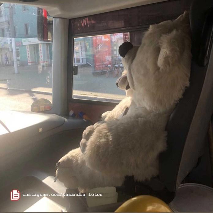 В рязанской маршрутке сняли на видео медведя-пассажира