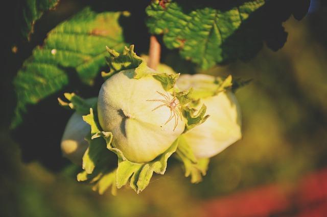 Ореховый спас 2021: традиции и приметы праздника