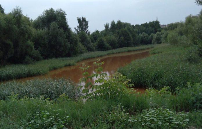 В Рязани проверят воду из пруда, где погибли утки и рыбы