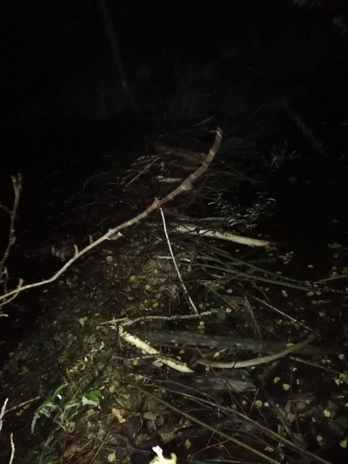 В Тверской области трёх заблудившихся людей нашли благодаря бобрам