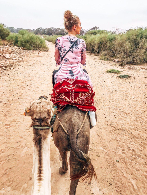 kamelreiten agadir
