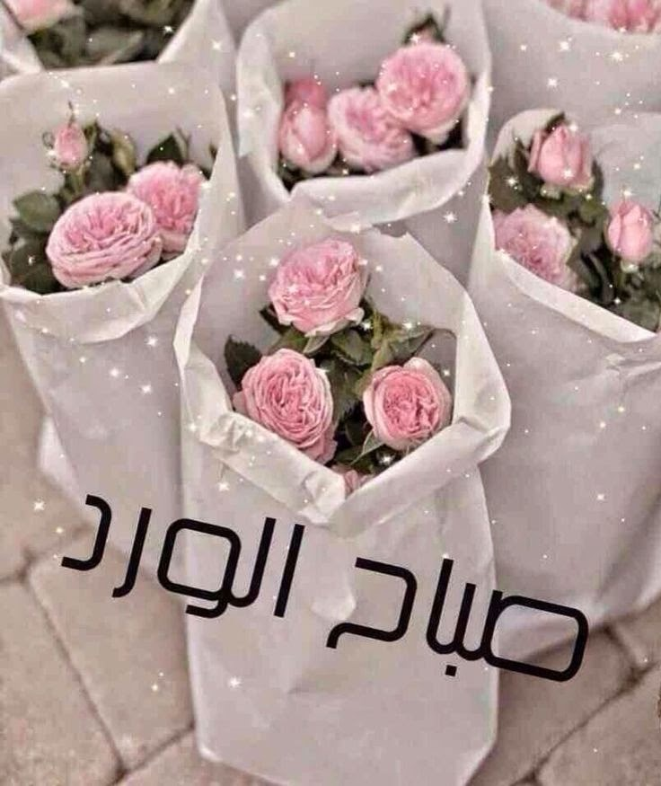 صباح الورد Ajabanee