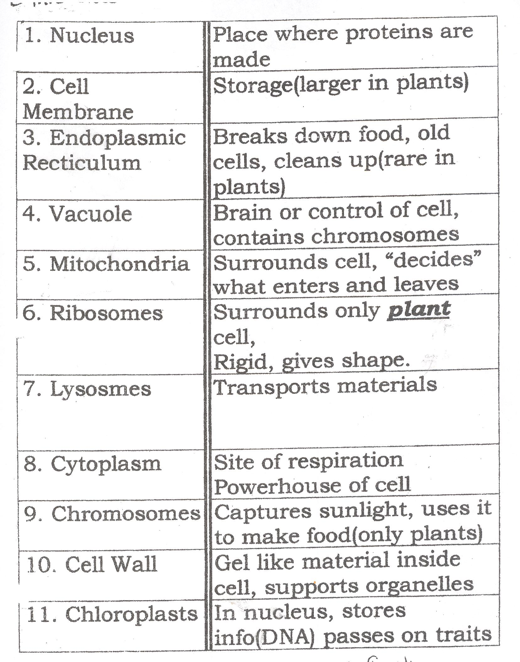 Parts Of The Cell Matching Worksheet