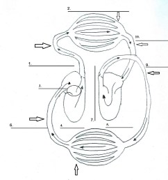cardiovascular system heart diagram blank [ 1409 x 1658 Pixel ]