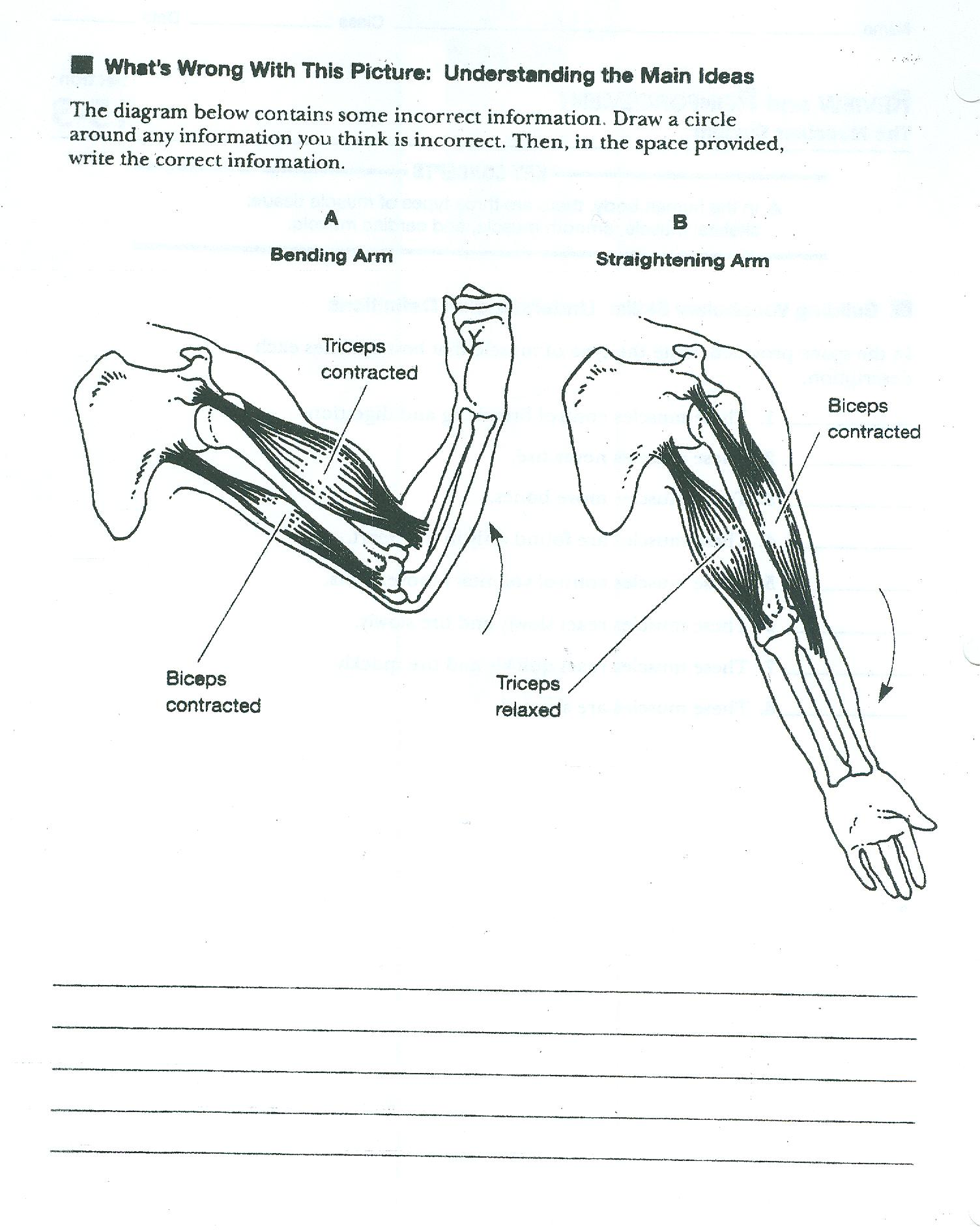 muscular system diagram worksheet 2002 yamaha 350 warrior wiring worksheets recetasnaturista abitlikethis muscle pairs jpg