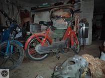 Rat_moped-1