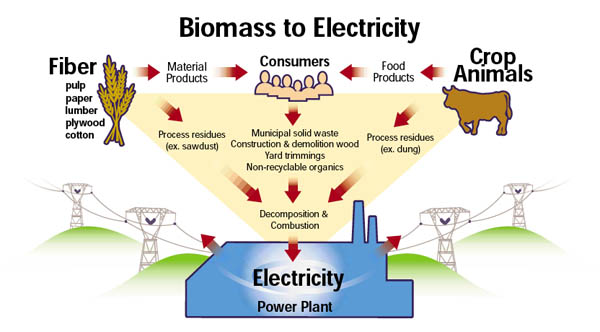 Biomass As Energy Welcome To 7th Grade