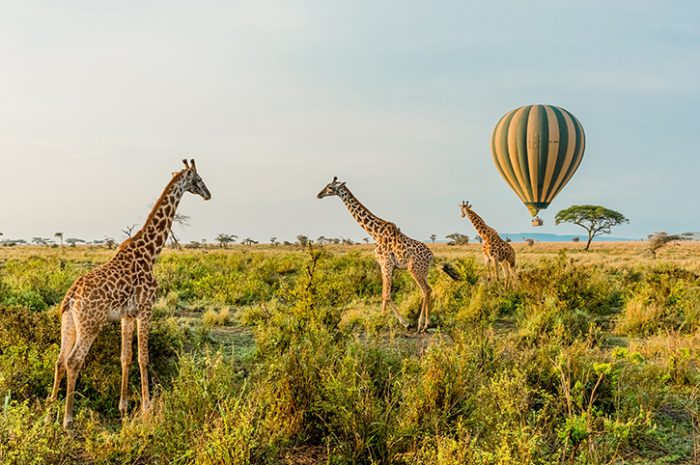 Balloon-and-giraffes-700x465