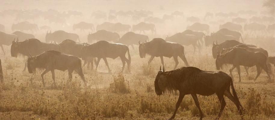 serengeti-central
