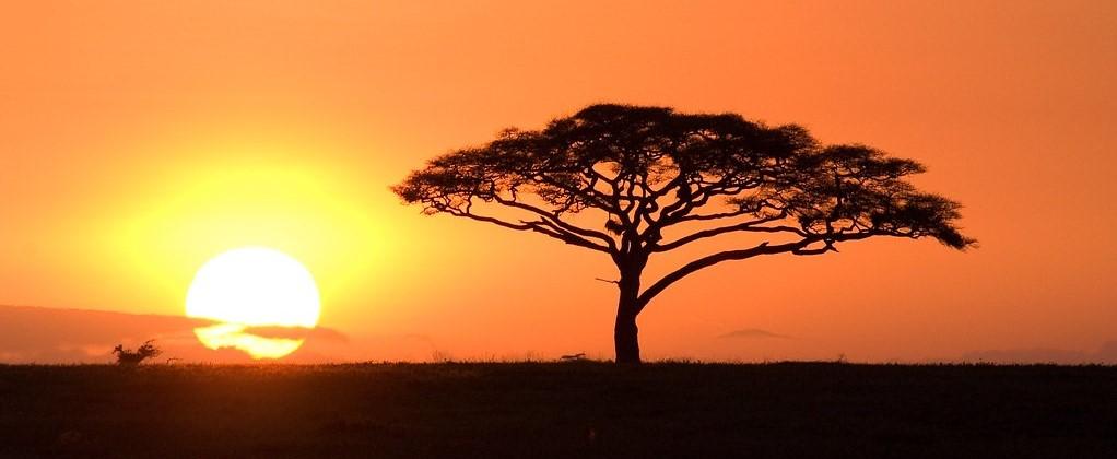 sunset serengeti (2)