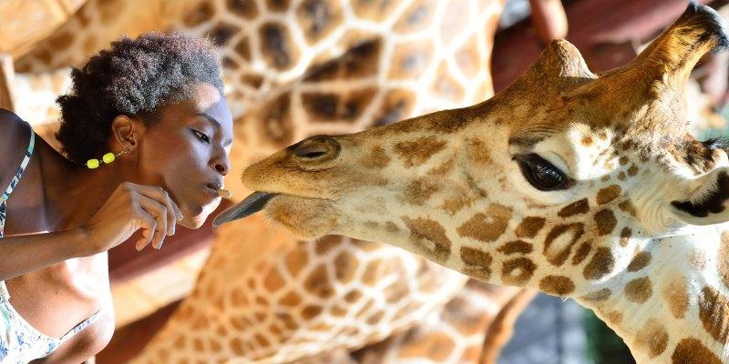 giraffecenterimg3