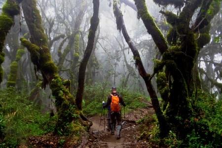 kilimanjaro-rainforest_hike