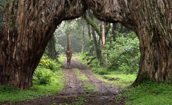 Arusha-National-Park.jpg