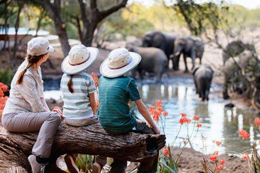 Family-Safari.jpg
