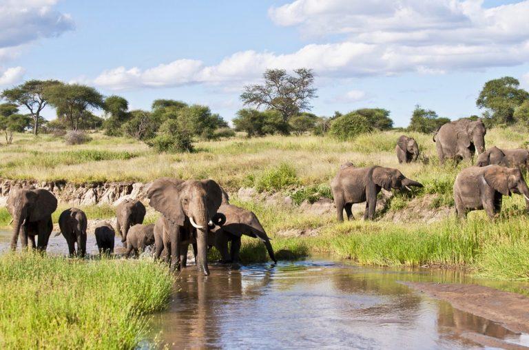 safari-through-the-national-parks-tarangire-ngorongoro-01-1360x900-1.jpg
