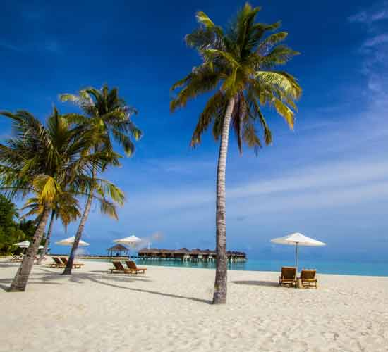 11-DAYS-LUXURY-MIGRATION-AND-TROPICAL-BEACH