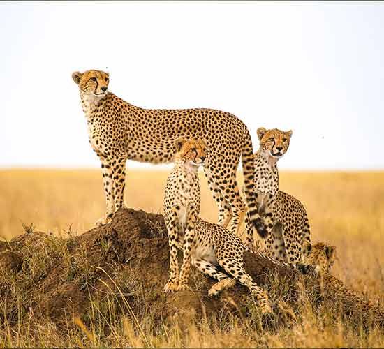 5-DAYS-TANZANIA-BIG-CATS-SAFARI