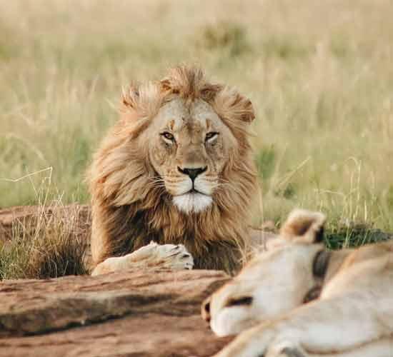 6-DAYS-TANZANIA-BIG-CATS-SAFARI