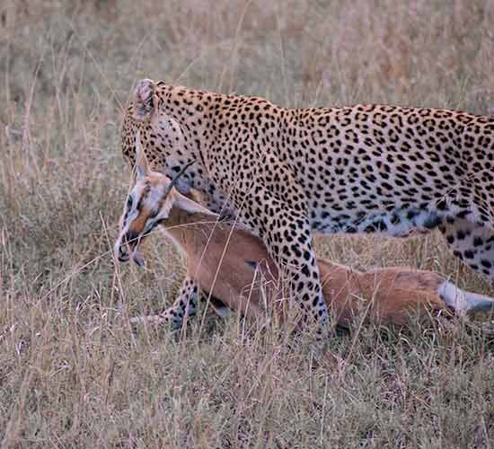 6-DAYS-TARANGIRE,-SERENGET-AND-NGORONGORO-BIG-CATS-CAMPING-SAFARI
