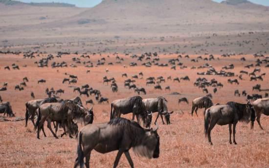 Serengeti-Migration-Hero