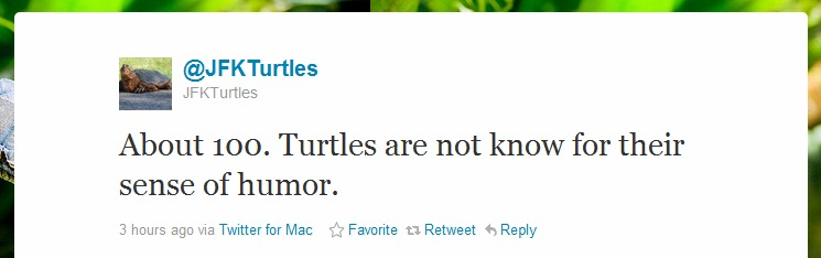 JFK Turtles Launch Twitter Account