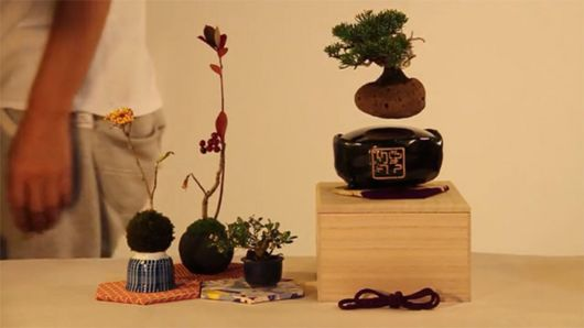 Floating Air Bonsai Trees Are Now A Reality