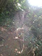 A spider web in the sun.