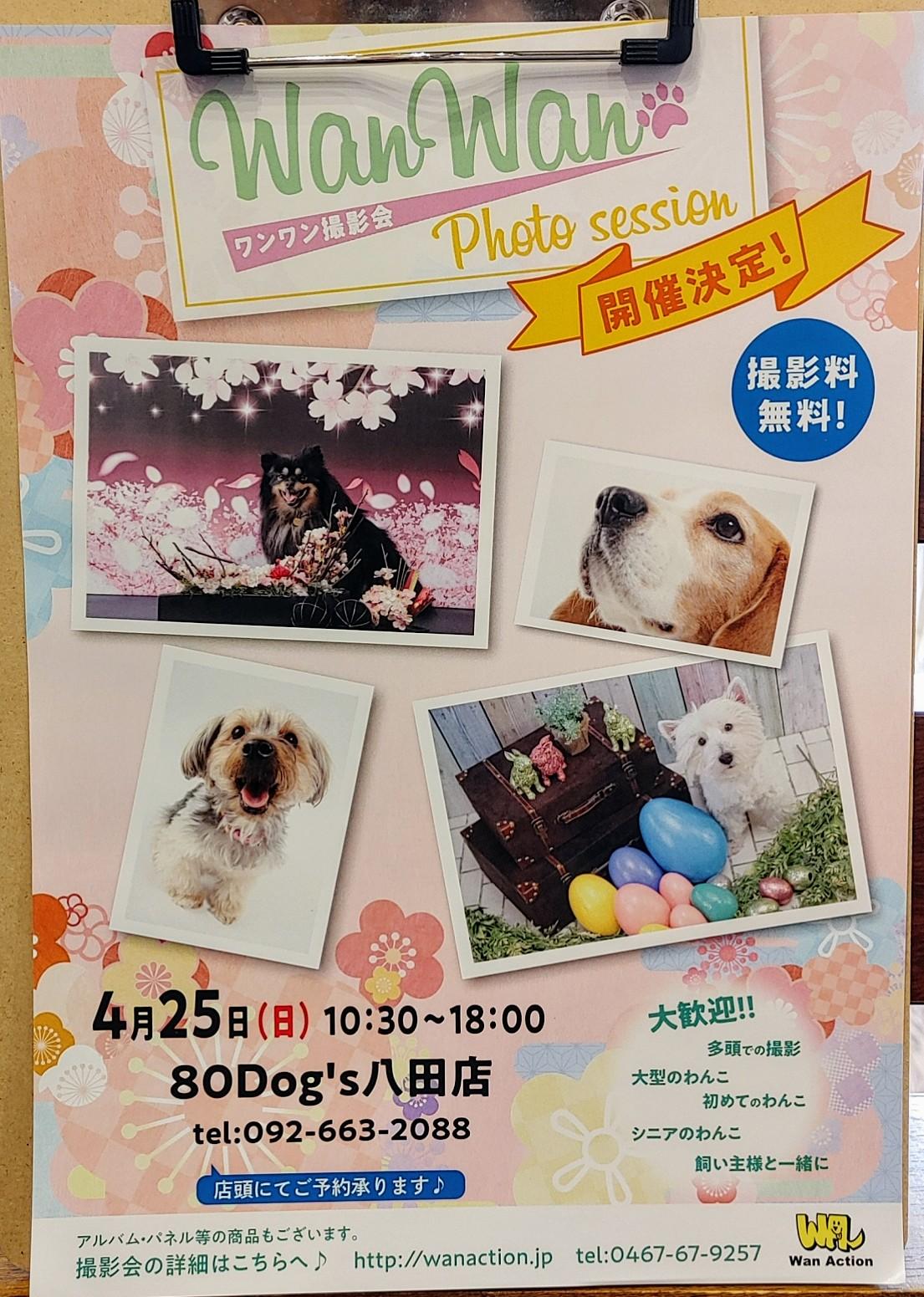 ワンワン撮影会4月25日(日)10:30~18:00 80Dog's八田店
