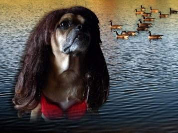 "2012 (""On Golden Pond"")"