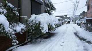 東京の大雪で大混乱【暖冬こそ大雪に注意しよう】