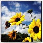 [PHOTO]花とコスモス