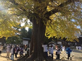 極楽寺のイチョウの木