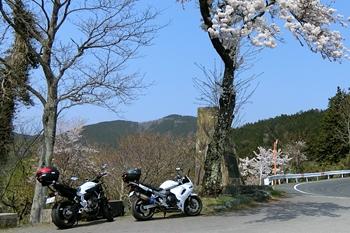 ヤビツ峠・菜の花台・神奈川県