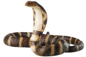 コブラ cobra