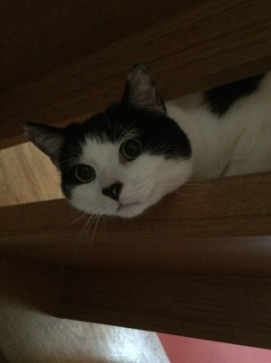 Day 63, 21/6/2015. Peek-a-boo through the stairs.