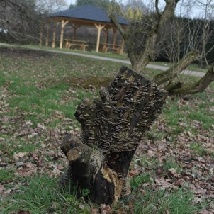 A tree stump