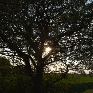 The Sun Through a Tree