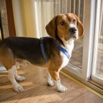 Use These Tips For House Training Your New Puppy Hastings Veterinary Hospital