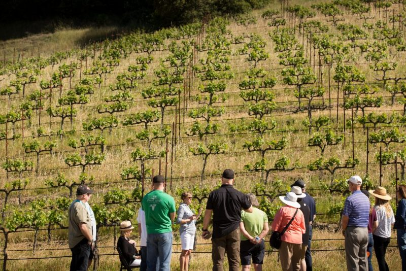 Molly's Vineyard Designate Tour hosted by Diane Wilson in 2017