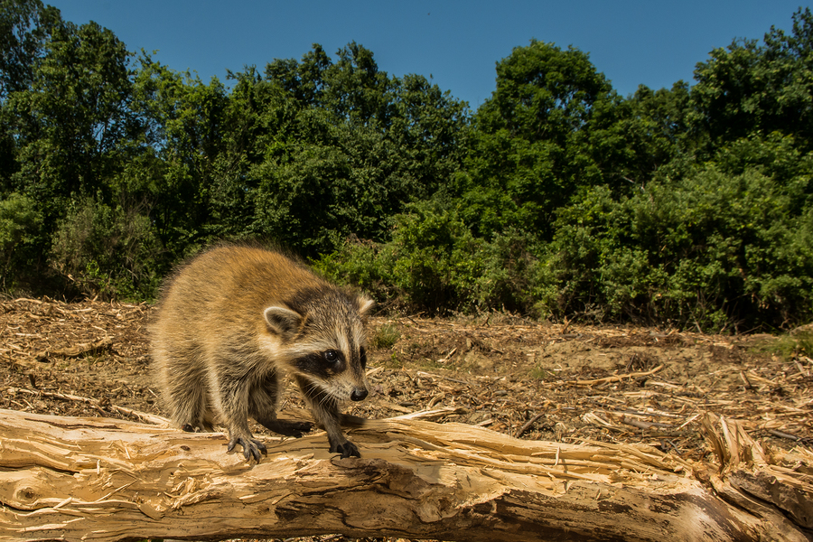 Loss of animal habitat