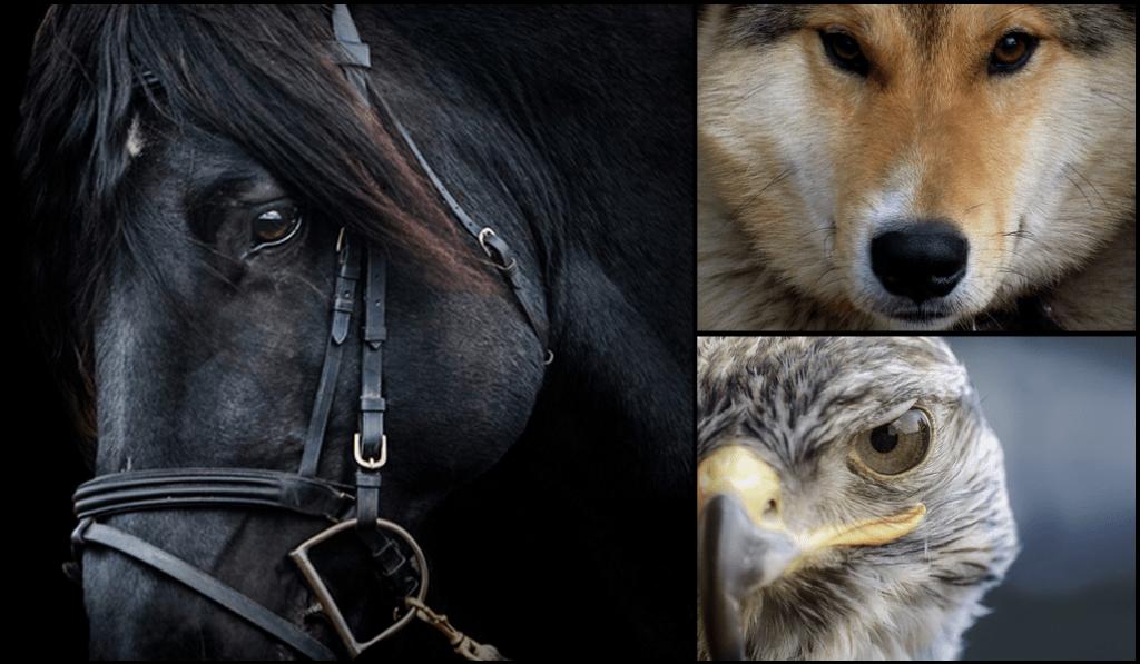 Ke zvířatům