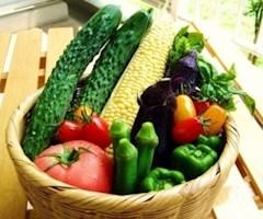 池袋キャバクラはちみつくろーばー きらら 野菜