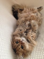 池袋JK制服キャバクラはちみつくろーばー いま 愛猫
