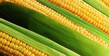 Растворимые кукурузные волокна полезны для женских костей