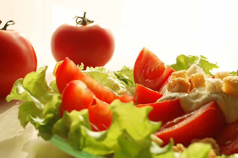 Вегетарианская диета способна защитить здоровье сердца