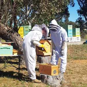 Two people inspecting a frame during a beekeeping workshop
