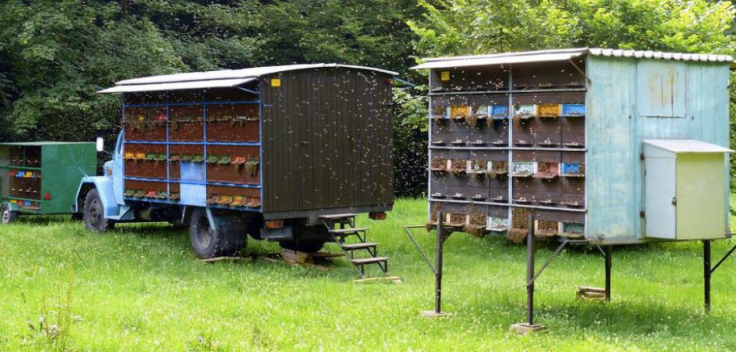 AZ hives on trailer, van and stilts