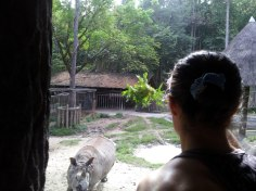 Sylvie von Duuglas-Ittu - Rhino - Chiang Mai Zoo