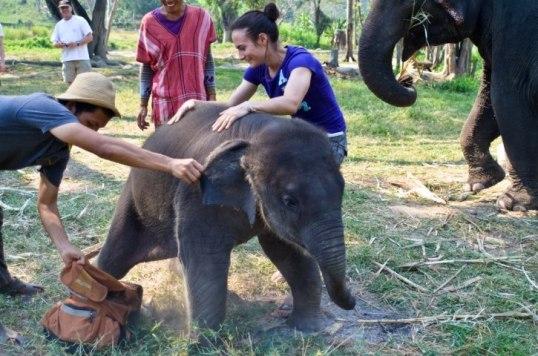 baby elephant stomp