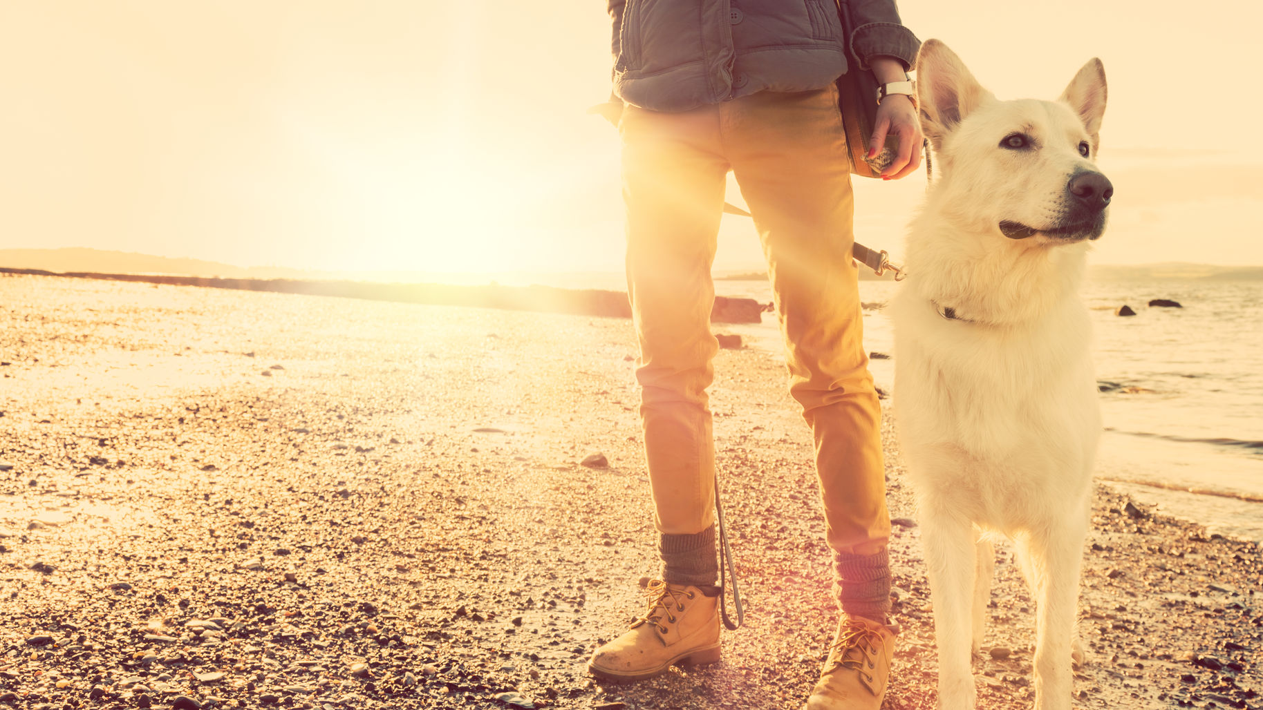 4 Protect Pets Against Heat